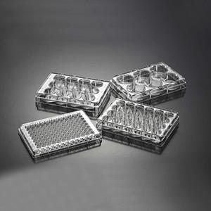 细胞培养板,6孔,标准型,表面处理,已消毒,1块/袋,200块/箱