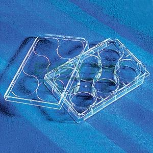 6孔板,透明,TC表面,PS材质,带盖,灭菌,散装,5个/包