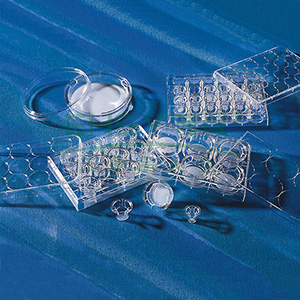 Transwell-24膜嵌套,6.5mm直径,8.0um孔径,PC膜,TC表面,PC灭菌,12个/包
