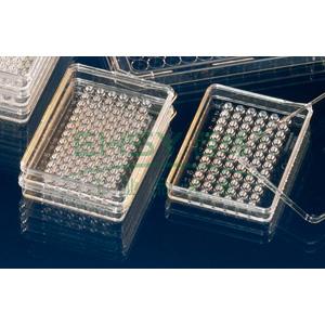 MiniTrays培养盘NunclonTM△,已灭菌,聚苯乙烯,外部尺寸84*59mm,孔数,60