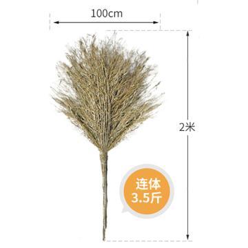 蘭詩 小竹葉掃把(有葉),有葉竹枝連體3.5斤 高2米 單位:把