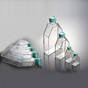 细胞培养瓶,标准型,300.0cm2,850ml,表面处理,滤膜盖,3只/袋,18只/箱