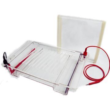 DYCP-32C型琼脂糖水平电泳仪(大号),六一