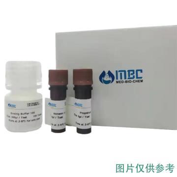 MBC 凋亡抑制蛋白抗体,50ul