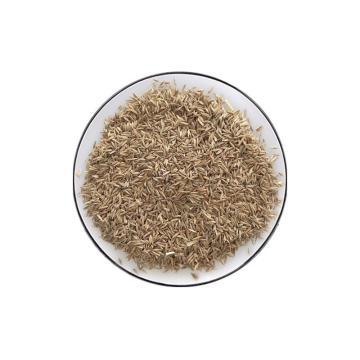 安赛瑞 草坪种子 四季青草籽实验田区绿化草籽成活率高 1kg蓝标黑麦草 园林造景耐寒草种子